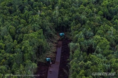 Deforestation for Pulp & Paper in Riau