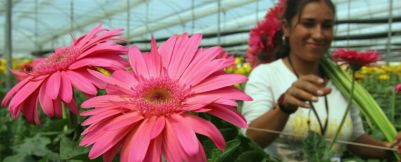 agriculture_flowers-header