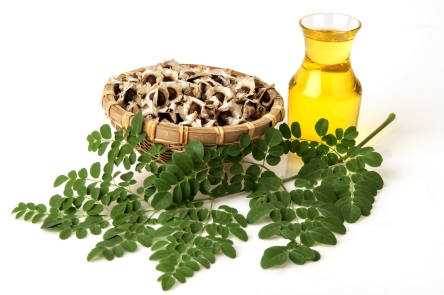moringa-oil-leaf-seeds